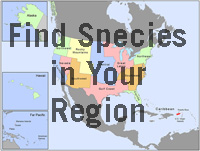 Click to find species in your region